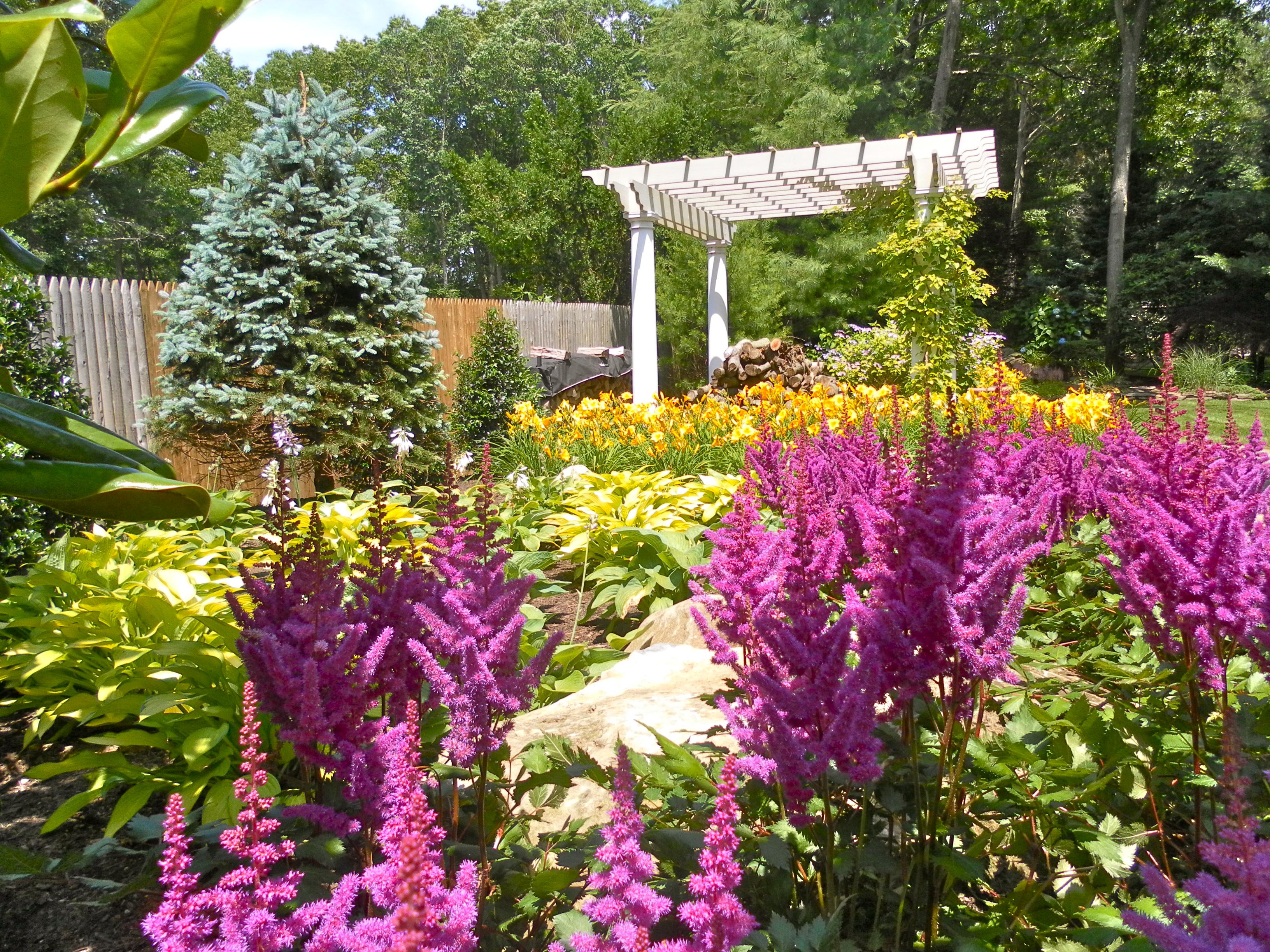 Цветы астильб многолетний фото